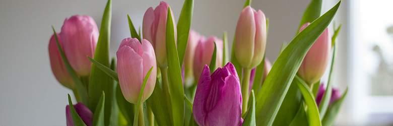 Bukiet z tulipanów z oferty EuroFlorist