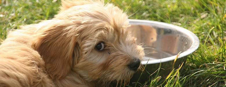 Akcesoria dla psów z oferty ZooPlus