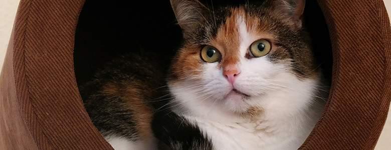 Akcesoria dla kotów z oferty ZooPlus